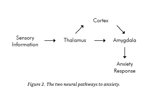 Two pathways of anxiety